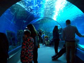 北ヨーロッパ最大級の水族館で楽しむコペンハーゲン親子旅!