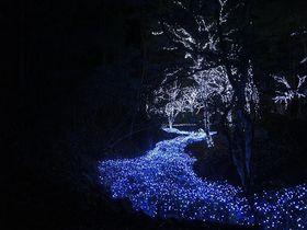 滝と光のコラボレーション!自然と融合したイルミネーションに心癒されて~冬ほたる(京都府京丹波町)