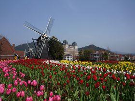 ハウステンボス『花の王国』四季折々の花であふれる、街歩きを楽しもう!