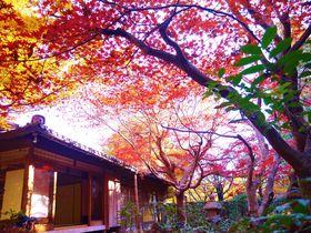 京都嵐山「厭離庵」で撮る見頃の紅葉!散りもみじの撮影ならココ|京都府|[たびねす] by Travel.jp