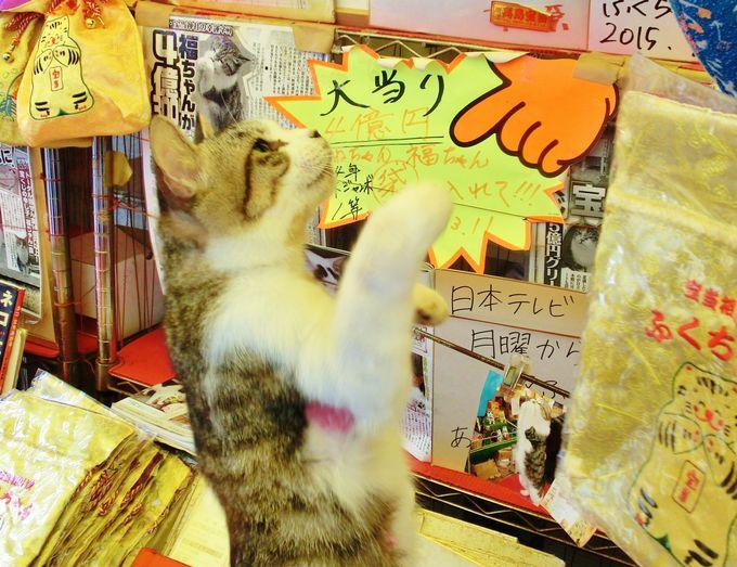 高額当選ニャ!唐津・高島の宝当神社にはリアル招き猫がいる