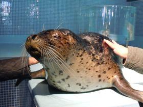 間近で見れる「アザラシショー」が凄い!!下田海中水族館|静岡県|[たびねす] by Travel.jp