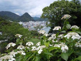 初夏を告げる色彩豊かな紫陽花園!伊豆・下田公園「あじさい祭」 静岡県 トラベルjp<たびねす>