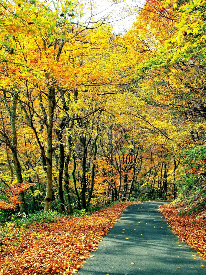 地元人しか知らない秘密の紅葉トンネル!国道399号線で福島~山形へ絶景ドライブ