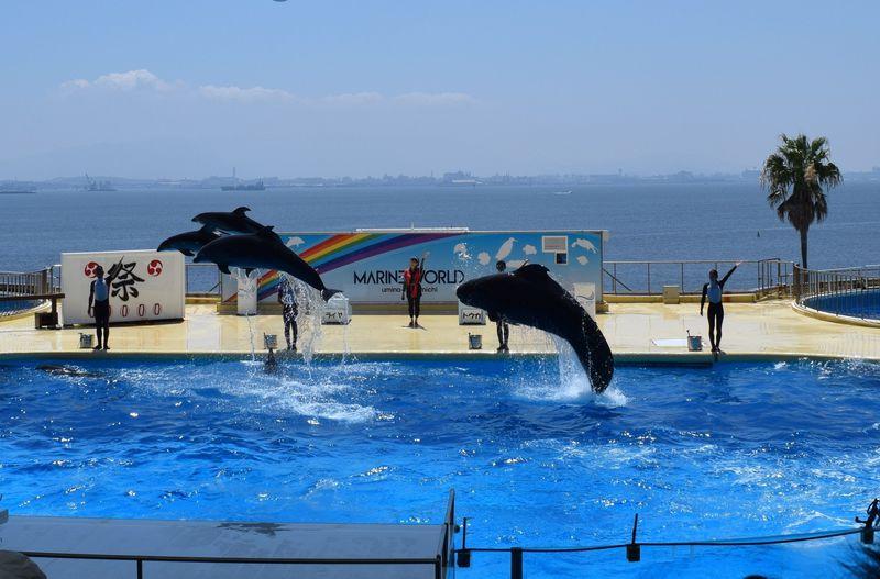 博多湾をバックにイルカがジャンプ!福岡「マリンワ... 博多湾をバックにイルカがジャンプ!福岡「