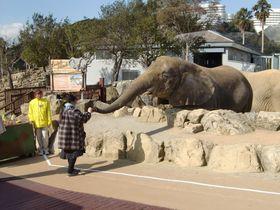 動物園と水族館が一度で楽しめる!和歌山アドベンチャーワールド