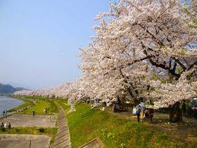 みちのくの小京都、角館で桜を愛でる