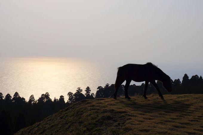 馬の楽園。宮崎最南端の都井岬に住む、野生馬に会いに行こう!