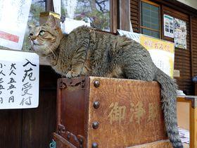 京都の子宝神社は四季の花が美しい!猫好きも憧れる梅宮大社