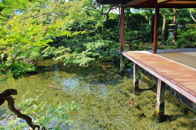 美し過ぎる水の絶景庭園にウットリ!島原「湧水庭園 四明荘」