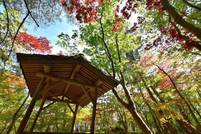 庭も逸品!茶席体験も歴史的逸品!新潟県「木村茶道美術館」