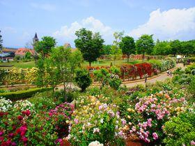 日本一長いバラの回廊を歩こう!ハイジの村「バラ祭り」山梨・北杜市