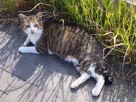 ネコ好きにおすすめ!博多から日帰り可能なネコ島「藍島」へ行こう!|福岡県|[たびねす] by Travel.jp