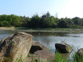 東京都東端の「葛西臨海公園」でバードウォッチングを満喫しよう|東京都|[たびねす] by Travel.jp