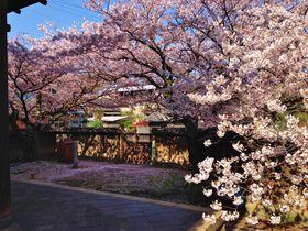 『流星ワゴン』が春を呼ぶ?!広島県・鞆の浦が桜色に染まる|広島県|[たびねす] by Travel.jp
