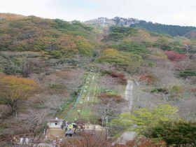 里山の優しい自然を満喫!能勢妙見山「妙見の森」で遊ぼう