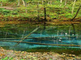 北海道パワースポット「神の子池」癒やしの水パワーで体内浄化を|北海道|[たびねす] by Travel.jp