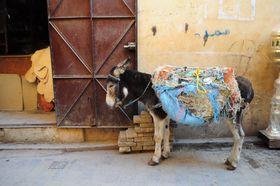 圧巻!世界一美しい霊廟!モロッコ・エジプト・チュニジアの世界遺産「タージマハル」