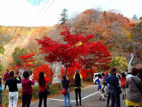 日塩もみじライン見逃せない絶景の紅葉スポット!那須塩原|栃木県|Travel.jp[たびねす]