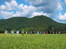 喧騒から離れてのんびり散歩!京都嵯峨野の魅力は秋色風景にあり|京都府|[たびねす] by Travel.jp