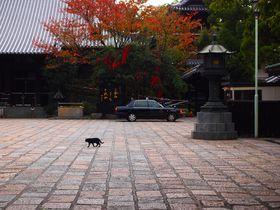 受付猫がいる!見所いっぱい博多「萬行寺」で癒されよう!|福岡県|[たびねす] by Travel.jp