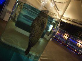 昼とはまた違う!夜の京都水族館の可愛い「いきもの」たちに会いに行こう!|京都府|[たびねす] by Travel.jp