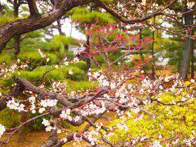 梅も必見!弘法から豊臣・徳川へと受け継がれた京都「智積院」|京都府|トラベルjp<たびねす>