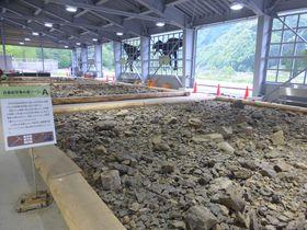 目指せティラノの歯!福井県「HOROSSA!」で化石発掘体験