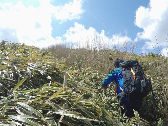 壮大な360°の絶景と富士山!静岡・玄岳!笹原ハイキング