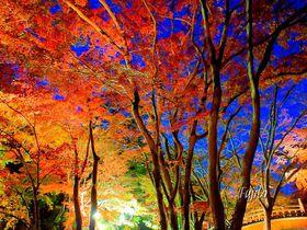 熱海温泉で一年中楽しむ!花と紅葉の絶景観光スポット五選|静岡県|[たびねす] by Travel.jp