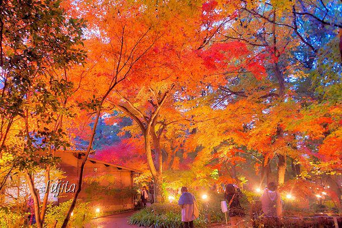 平林寺の紅葉と一緒に見たい!新座市「睡足軒」紅葉ライトアップ