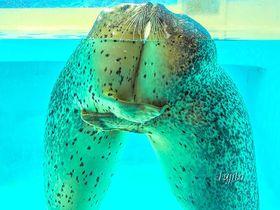 本当にキュートな海洋生物たち!!伊豆・下田海中水族館は「めちゃ可愛い」がいっぱい! 静岡県 トラベルjp<たびねす>