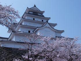 歴史的見所と戦闘的縄張を秘めた桜纏いし名城~会津若松城~