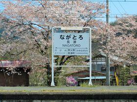 町中桜が咲き誇る!SLが走る埼玉県長瀞町で桜の名所を巡る!