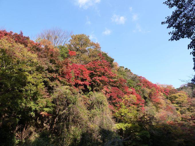 房総半島ど真ん中!養老渓谷で絶景紅葉散策を楽しもう