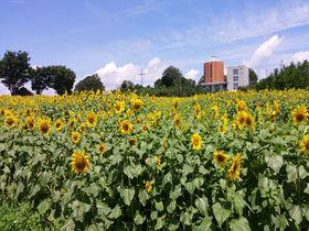 名古屋なのに北海道気分!?愛知牧場でモーニングと絶景を味わう|愛知県|Travel.jp[たびねす]