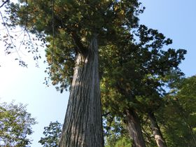 文豪が愛した伊豆修善寺。創作想起は幾多の逸話と自然の癒し|静岡県|Travel.jp[たびねす]