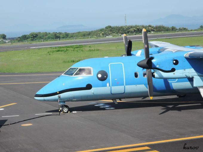 感動!野生イルカの島、天草。かわいいイルカの飛行機で、イルカの群れを見に行こう!