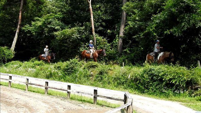 山梨・小淵沢ICから至近!乗馬クラブ「ホワイトサドル」で場外騎乗体験