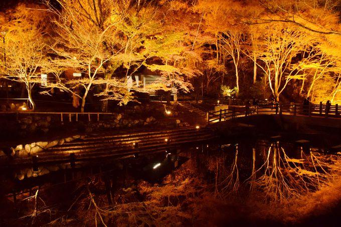 ライトアップの逆さ紅葉が幻想的!愛知県瀬戸市「岩屋堂公園」