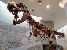動物園と遊園地と博物館が1つになった 豊橋「のんほいパーク」