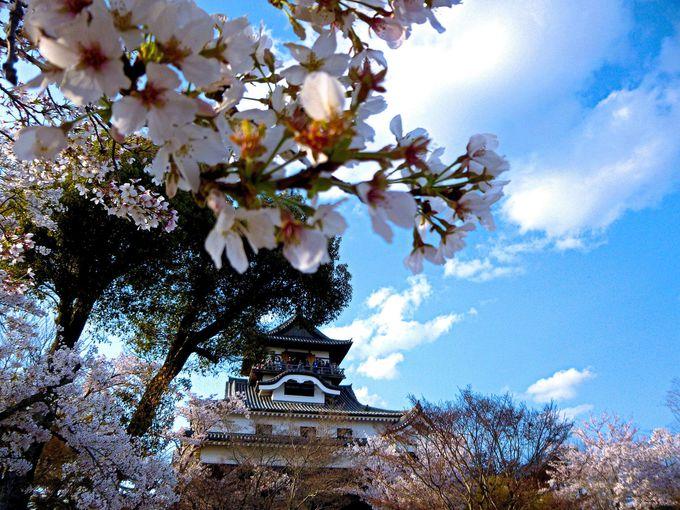 満足度が増幅してとまらない!春の犬山城の鑑賞のツボ!愛知県犬山市