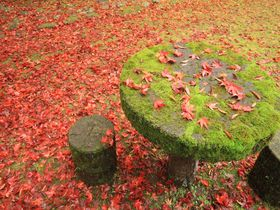 紅葉も抜群の見応え!島根「鰐淵寺」は自然の恵に抱かれた絶景スポット
