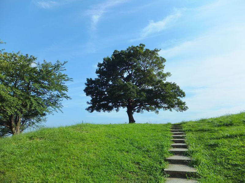 緑の丘の「ゆずの木」へ。横浜・清水ヶ丘公園はゆず... 緑の丘の「ゆずの木」へ。横浜・清水ヶ丘公