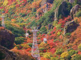 絶景とスリルの5分間!大自然に恵まれた小豆島屈指の紅葉の名所「寒霞渓」を空中散歩!