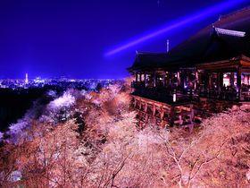 京都の春はレンタサイクルが便利!1泊2日で巡る桜尽くしモデルコース
