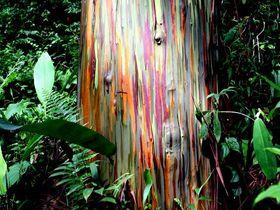 七色の木に謎の遺跡!冒険心がくすぐられるコスラエ「メンケ遺跡」