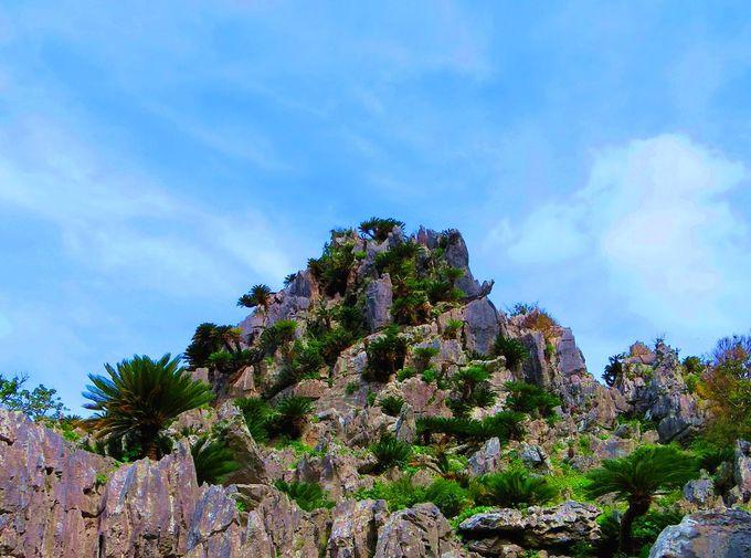 2億年の時が語りかけてくる沖縄の聖地!「大石林山」は琉球神話の杜