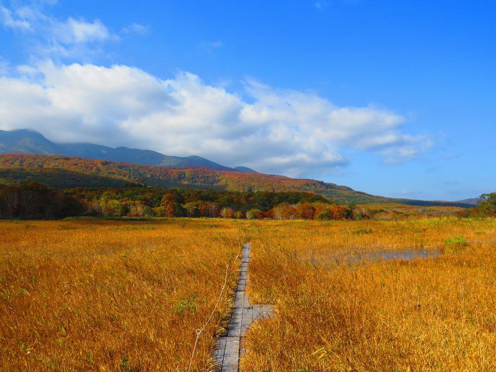 青森「田代平湿原」は秋の穴場!一面の黄金色を楽しもう
