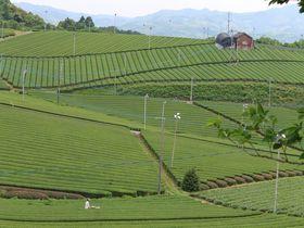 香り高き絶景!福岡「八女中央大茶園」でトレッキング体験|福岡県|トラベルjp<たびねす>